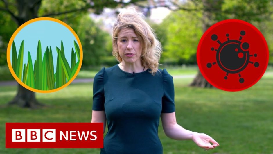 Hay fever or coronavirus: The symptoms compared   BBC News