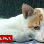 Coronavirus: Treating Delhi's dogs and cats in the pandemic   BBC News