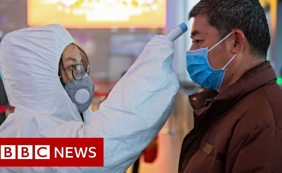 Scientists search for coronavirus vaccine   BBC News