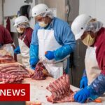 Coronavirus: Why are there outbreaks in meat processing plants?   BBC News