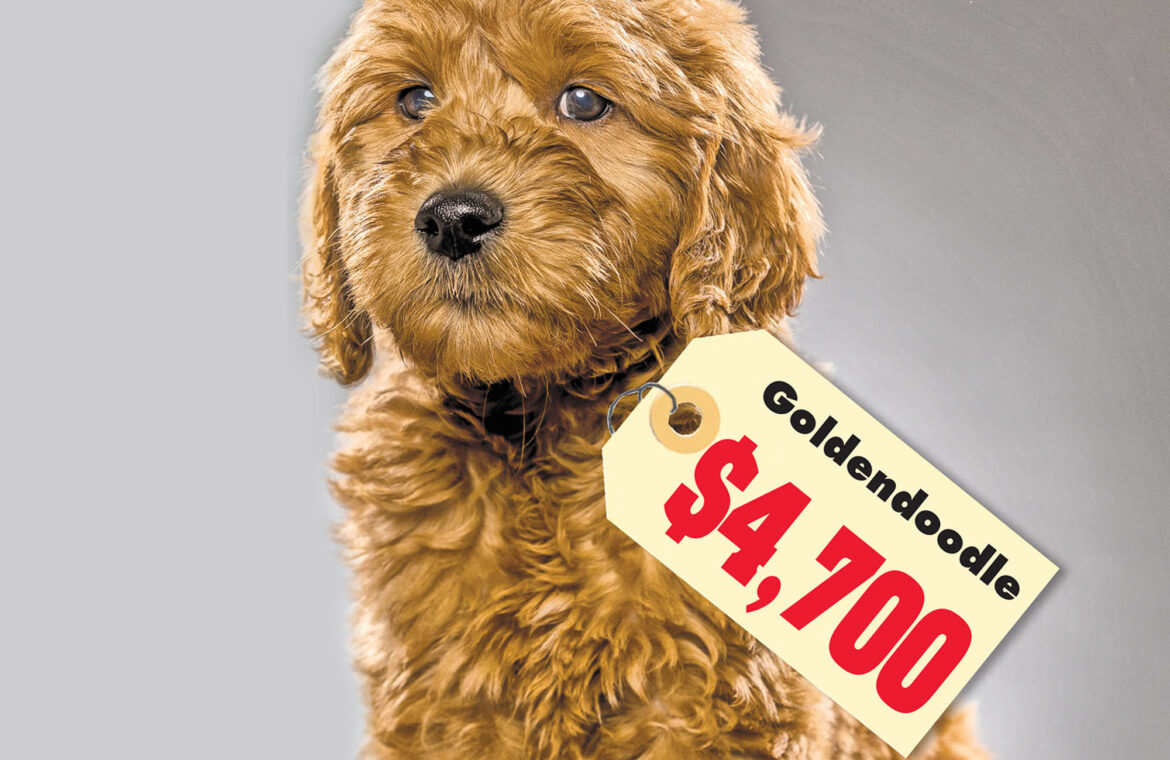 COVID 19 is sending pedigree puppy prices through the roof