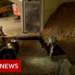 Coronavirus: Potato mountains and rotten cheese   BBC News