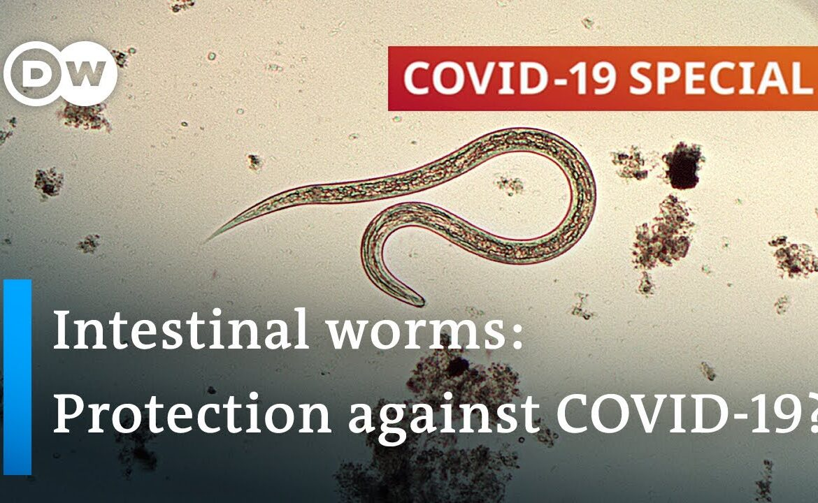 Coronavirus: Are parasitic worms responsible for low fatality rates in Africa?   COVID 19 Special
