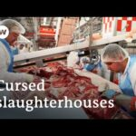 Coronavirus curses a German meat processing plant | Focus on Europe